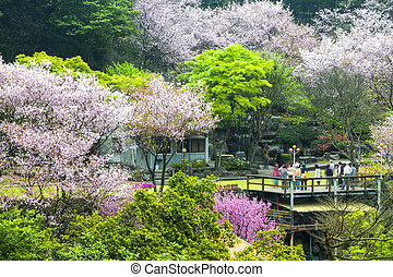 Beautiful Sakura place in Taiwan for adv or others purpose...
