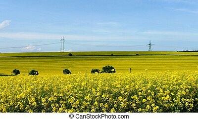 prado, primavera