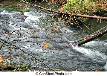Dirty stream in the deep forest.