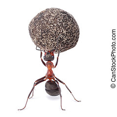 mighty ant holding heavy stone