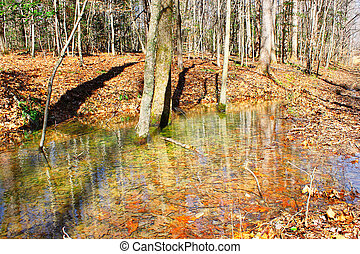 Early spring rainfall Swampwater running through the woods...