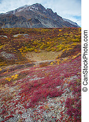 Wilderness Tundra - Wilderness of Alaska tundra in late fall...