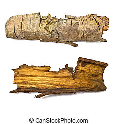 Close-up of isolated broken stub log bark with wooden...