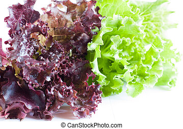 Fresh juicy leaves of lettuce, close up