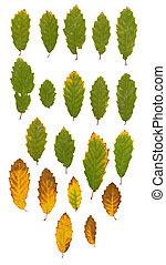 jesion, liście, zielony, Żółty