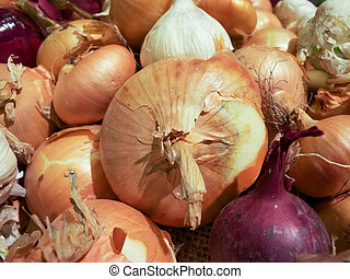 Onions - Collection of eatable onions for cooking.