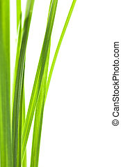 Green grass blades isolated on white background