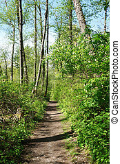 Dash Point State Park. Spring trail. Green fresh forest. -...