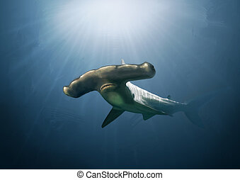 Hammerhead shark digital painting - Digital painting of a...