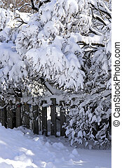 House fence in winter