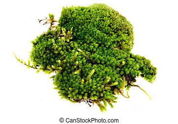 Closeup moss isolated on white background