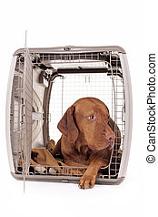 dog laying in crate - pure breed hunting dog laying in crate...