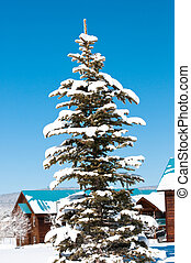 Snow covered pine tree - Beautiful snow covered pine tree...