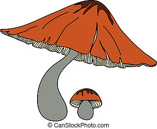 Beautiful colur mushroom - The wilt mushroom and baby...