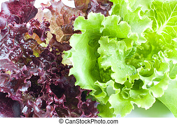 The leaves of red and green lettuce Healthy food