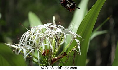Butterfly flying over beautiful flower, zoom in