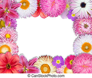 Flower Frame Pink, Purple, Red Flowers on White - Flower...