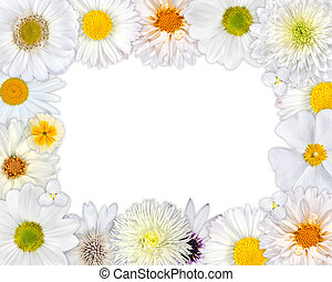 Flower Frame with White Flowers on Blank Background - Flower...