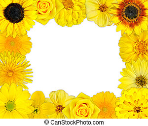 Flower Frame with Yellow Flowers on Blank Background -...