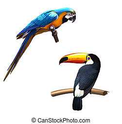 Colorful blue parrot macaw, toucan - Big elephant standing...