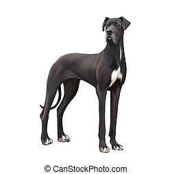 Black and white Great Dane Isolated illustration on white...
