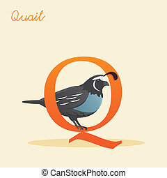 Animal alphabet with quail