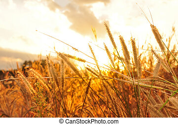 Flower grass sunset