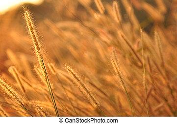 Flower grass sunset