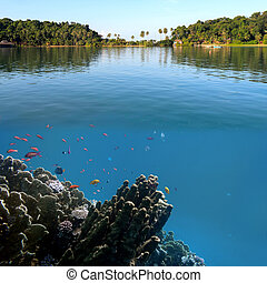 Photo of a coral colony on a reef top, Chang island, Thailand