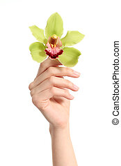 Beautiful woman hand holding up a green orchid