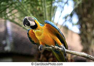 Parrot on a branch Park of birds Bali Indonesia