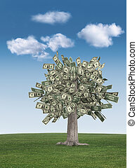 money tree and blue sky - money tree on grass against a blue...