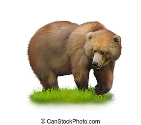 Walking adult bear on a grass. Isolated realistic...