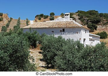 Olive grove, Olvera, Andalusia. - Country farm in olive...