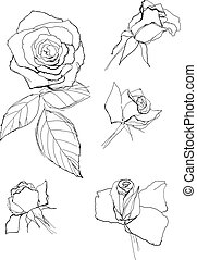 pen drawing roses collection
