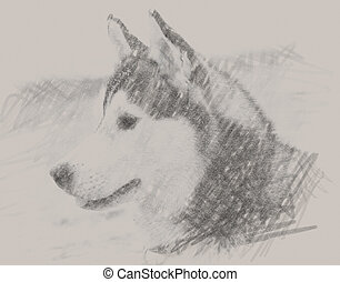 drawn portrait of siberian husky black and white