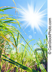 Weeds under the light - abstract beautiful fresh grass and...