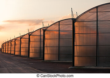 Large scale industrial greenhouse lit by sunet - Large scale...