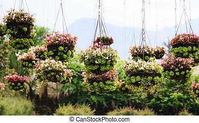 Flowerpots in the park