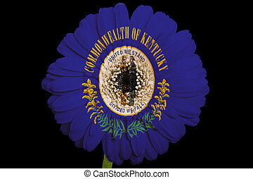 gerbera daisy flower in colorsflag of us state of kentuckyon...
