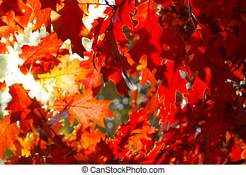 nature - autumn leaves background in sunny day