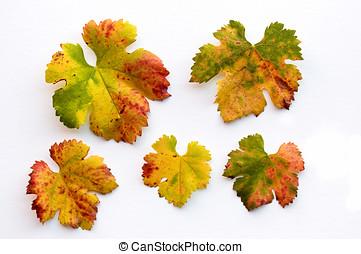outono, colorido, uva, folhas