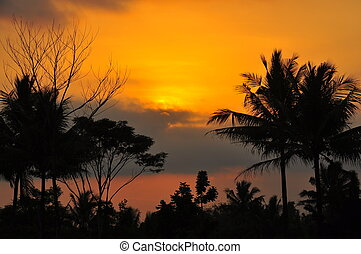 Majestic Sunset - Silhouette Trees at Sunset