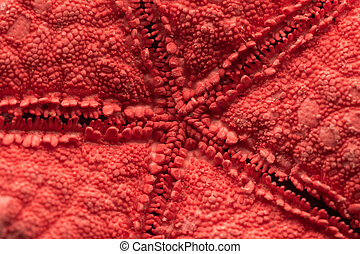 Starfish - Macro Photo Of The Ventral Side Of A Red Starfish