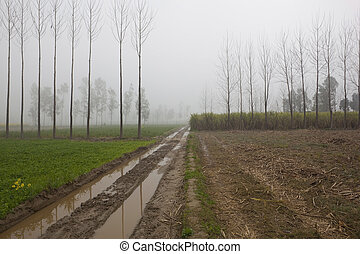 agriculture in rural Punjab - a muddy farm track running...