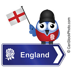 England sign - Comical England sign isolated on white...