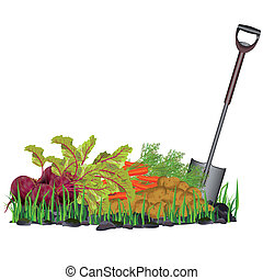 Autumn harvest vegetables on the grass and shovel, isolated...