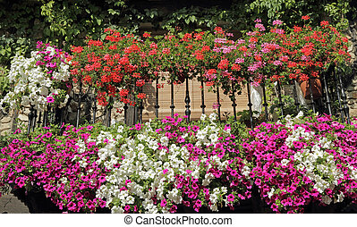 balcony with flowering plants, Spain, Europe