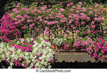 flowering plants on balcony - colorful flowering plants on...