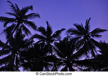 Blue Hour Sunrise - Stock Photo - Silhouette of Rows Palm...